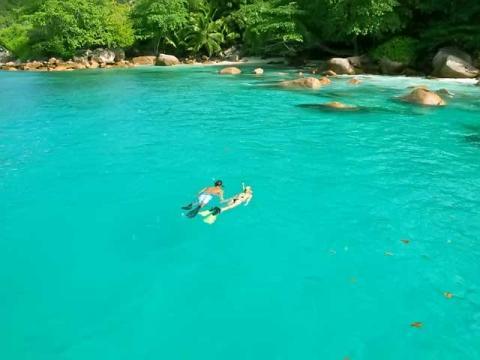 Уникальный подводный мир Сейшел дом для множества морских обитателей