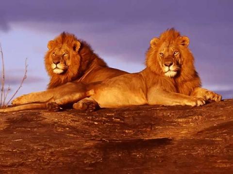Природа Кении – основа ее туристического богатства